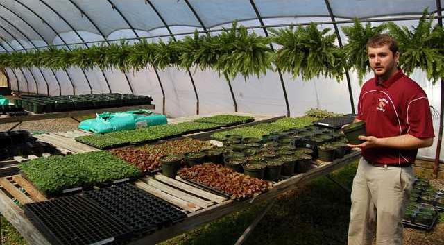 3 Greenhouse pic