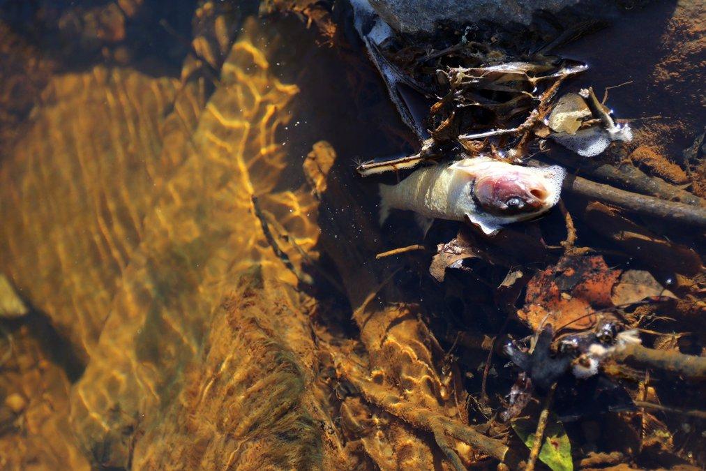 "Dawsonville chicken plant chemical spill makes ""Dirty Dozen"