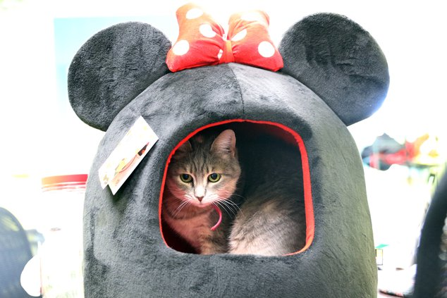 I-Xmas for Critters pic 2.JPG