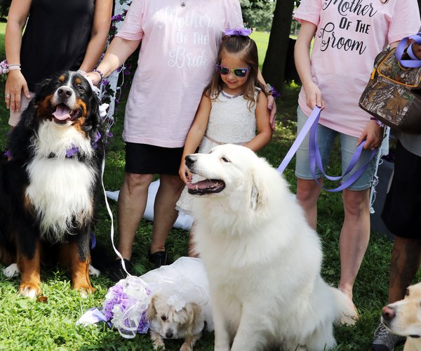 dog wedding 1